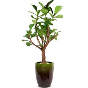 떡갈나무7호(특A)