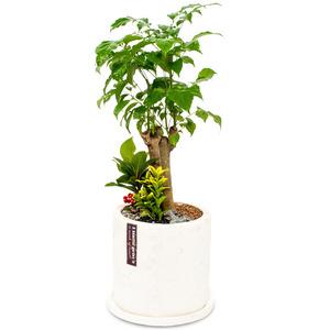 행복나무(테이블용)AA